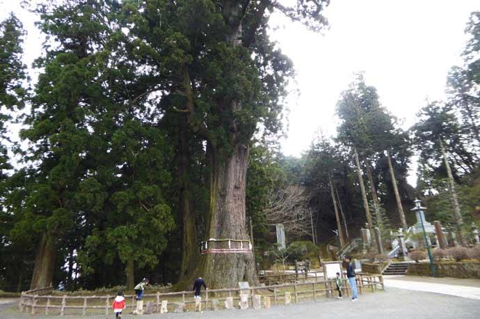 千年杉を本堂より撮影