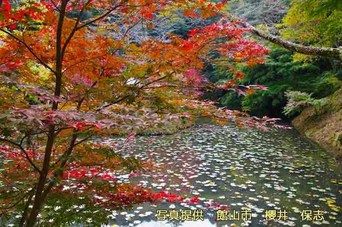 小松寺の紅葉シーン