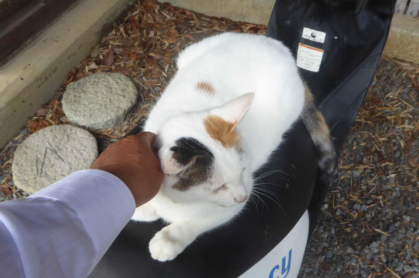 金乗院の三毛猫