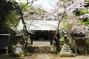 諏訪神社(館山市正木)の桜