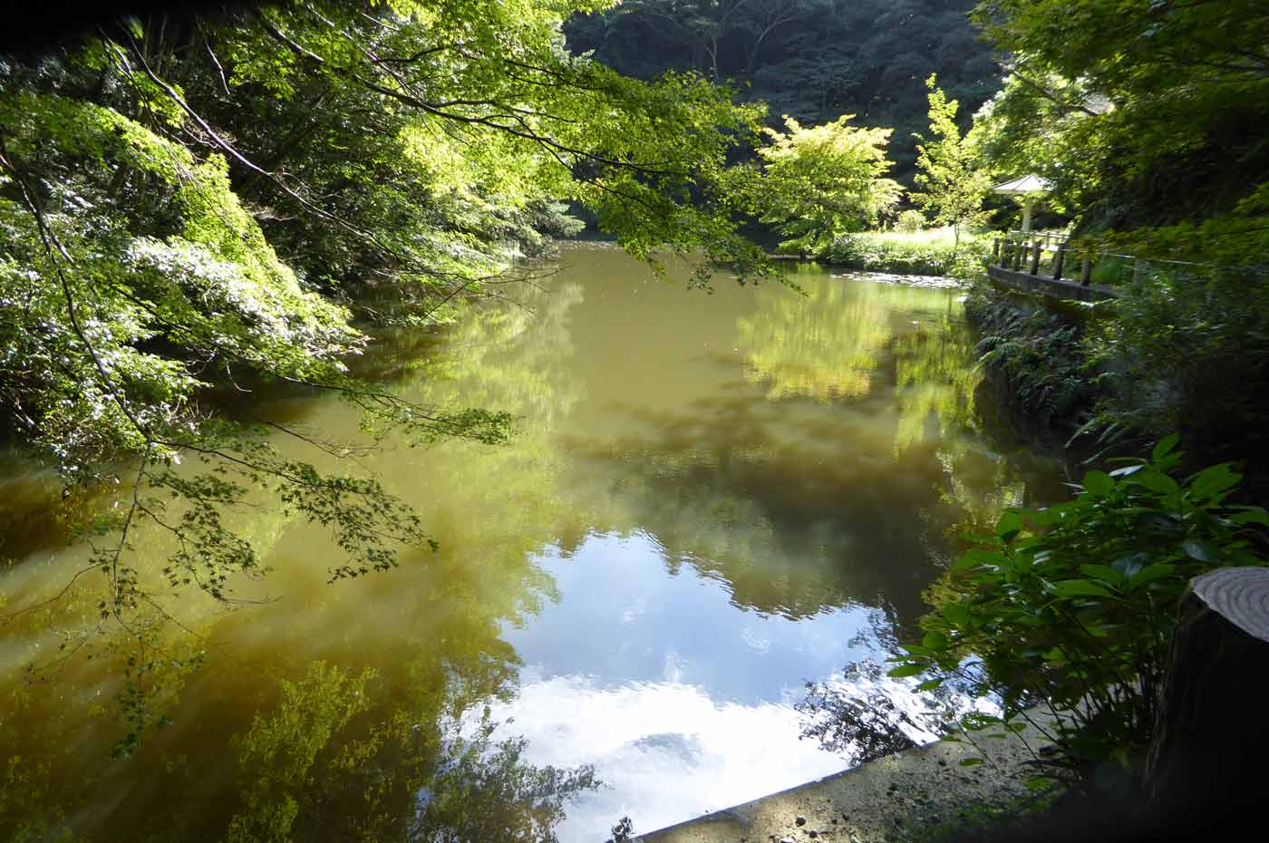 小松寺の池