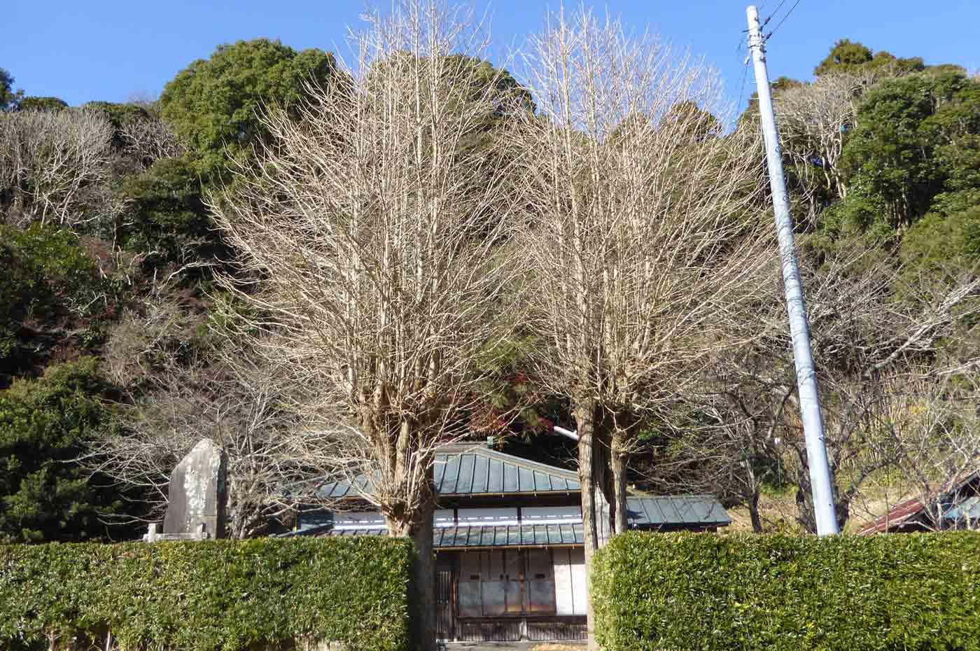 豊前寺の全景画像