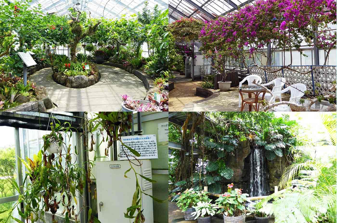 アロハガーデンの野鳥の温室