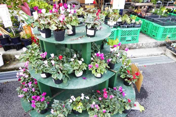 ローズマリー公園の花売り場の写真