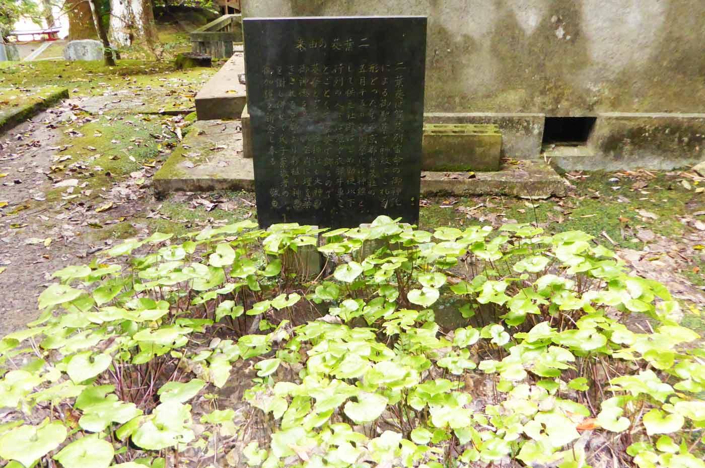 賀茂神社の二葉葵