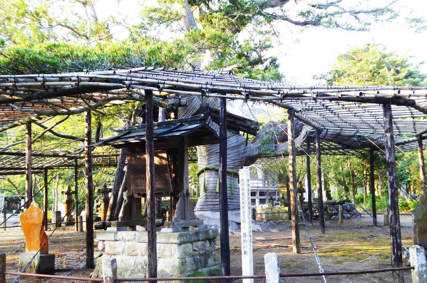 鏡忍寺の降神の槇の写真