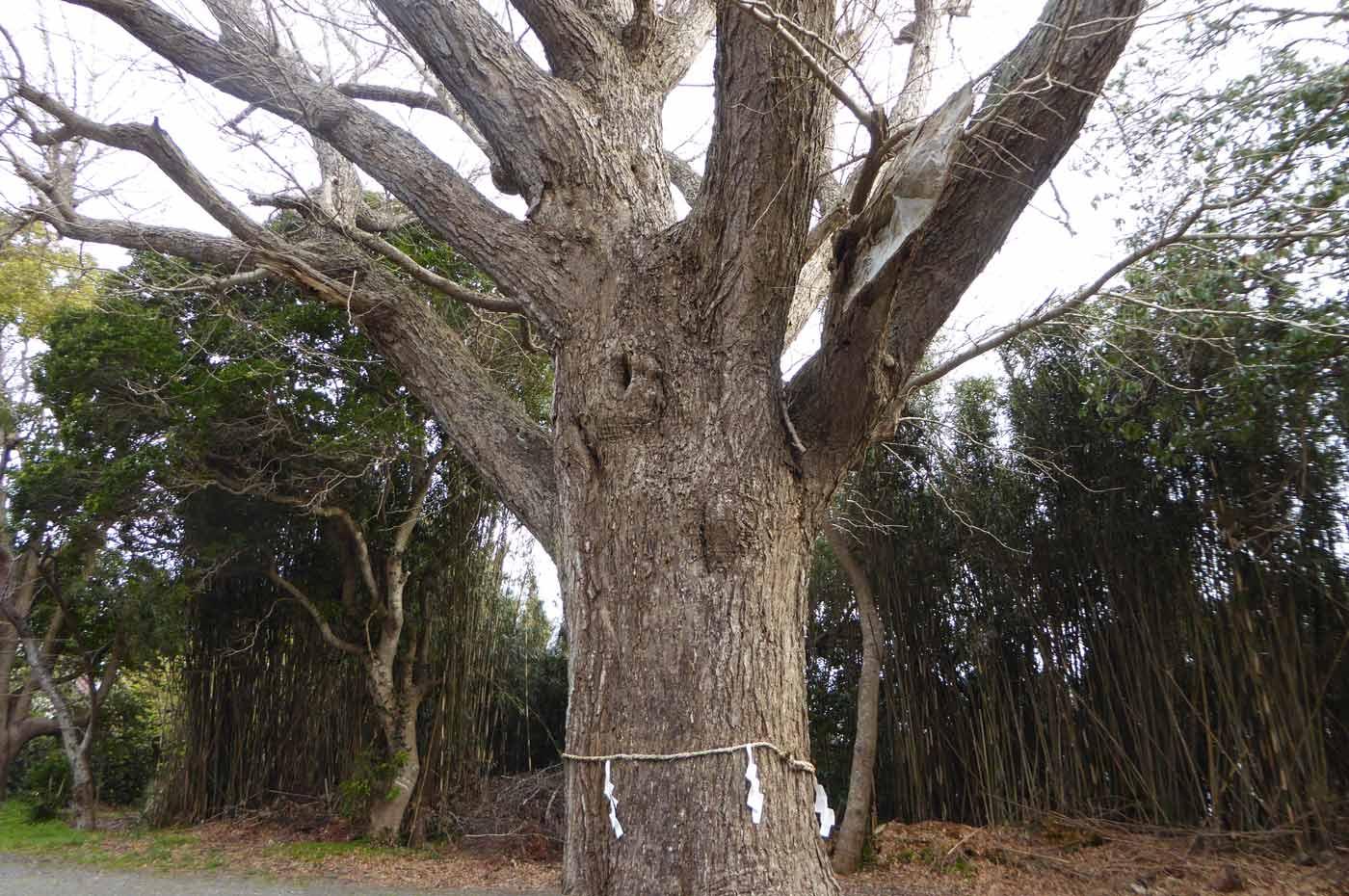 大銀杏の御神木