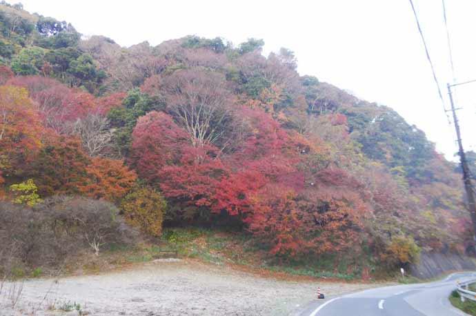 山中区公民館周辺の紅葉の様子