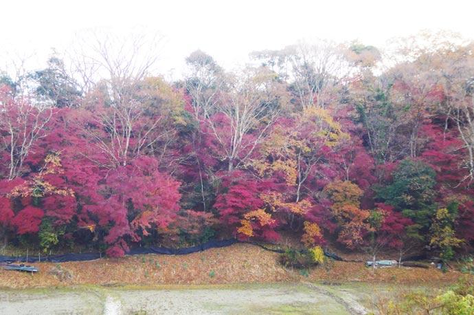 もみじの茂る谷の画像2