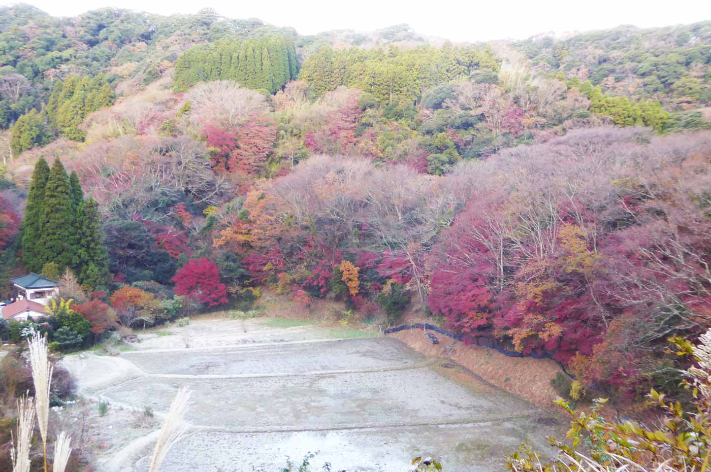 もみじの茂る谷の画像