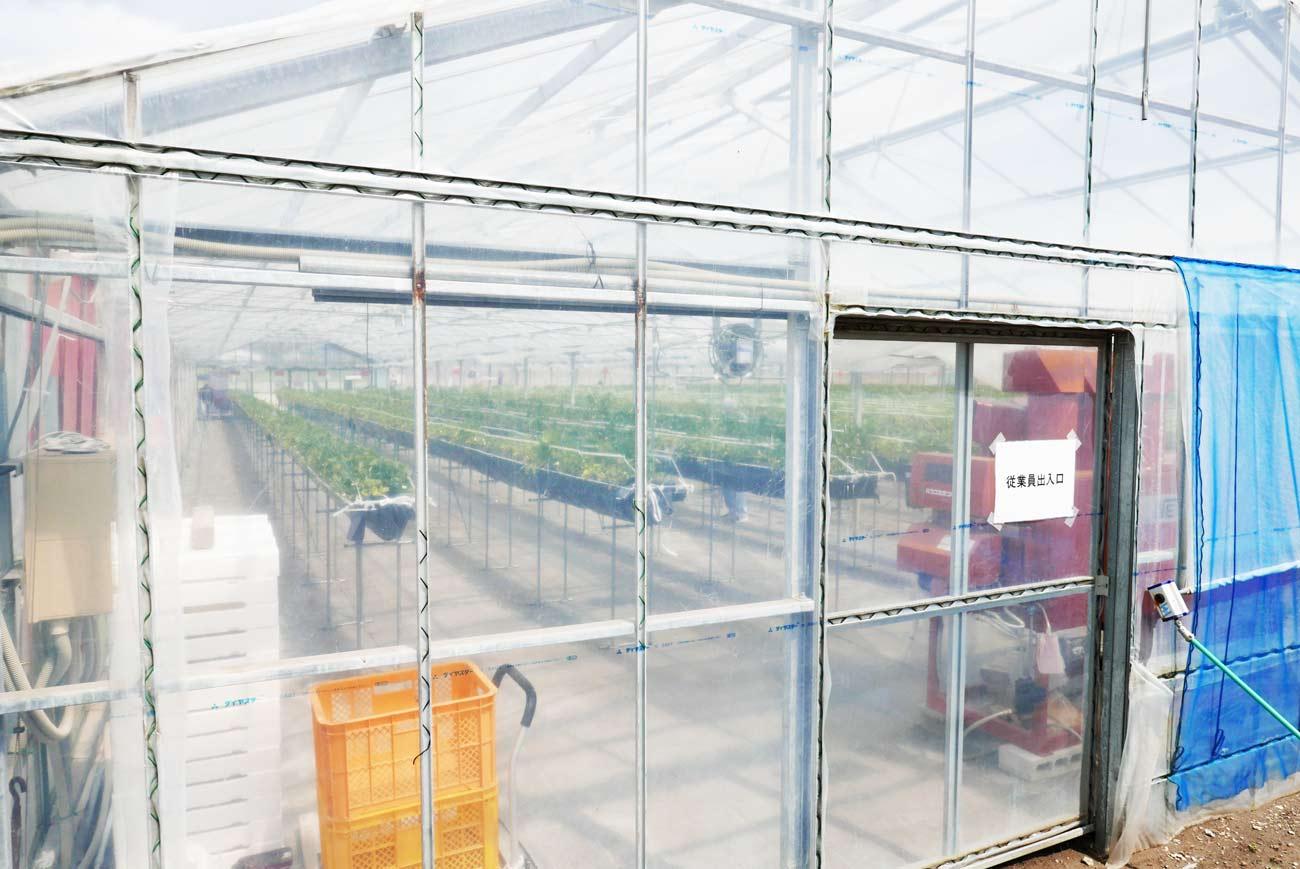 高設栽培の画像