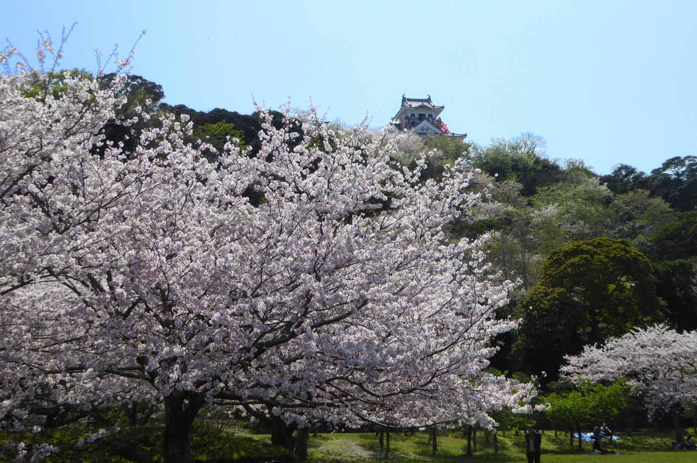 駐車場付近から館山城を撮影