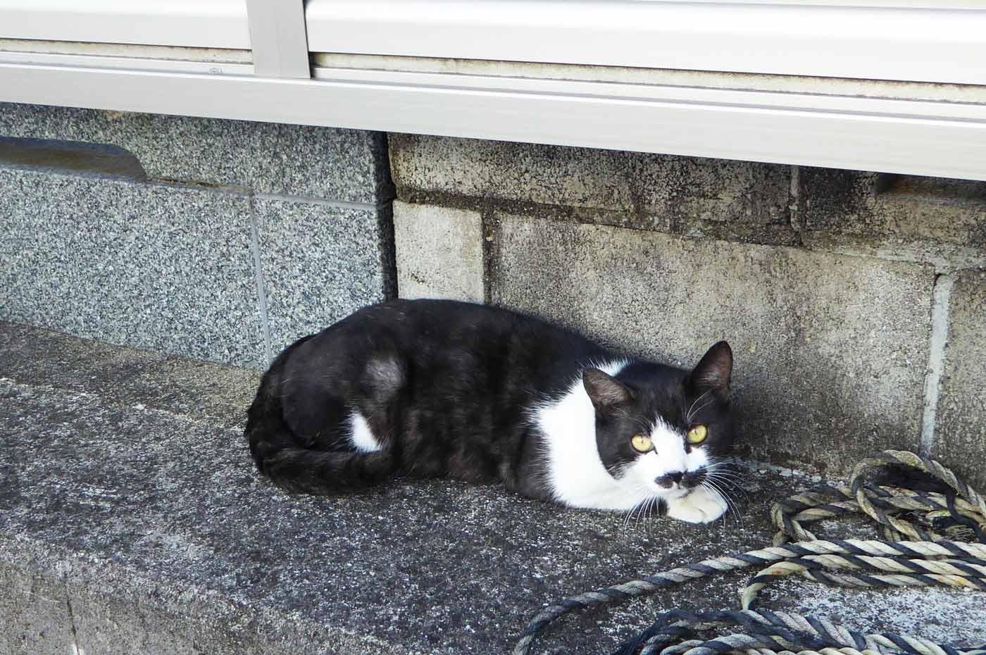 釈迦寺に居た猫の画像