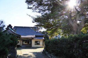 釈迦寺の本堂と槇の木の画像