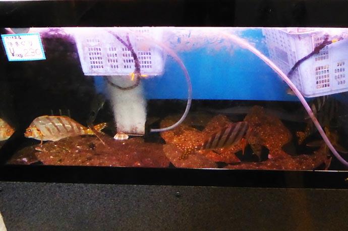 活けの鮮魚の画像