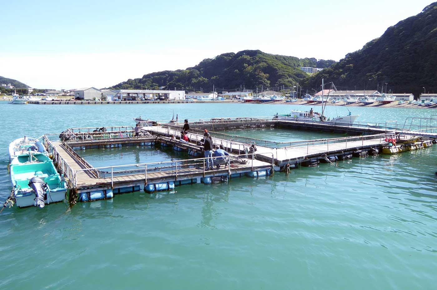 富浦 真鯛・鯵の釣り堀