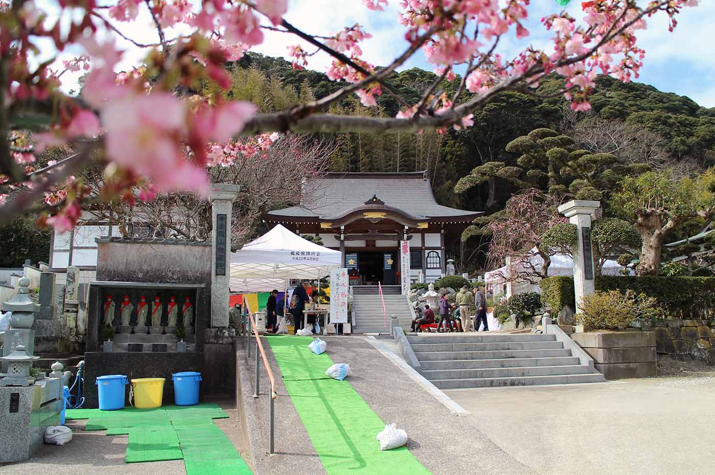 南房総家族時間 桜から覗く能蔵院