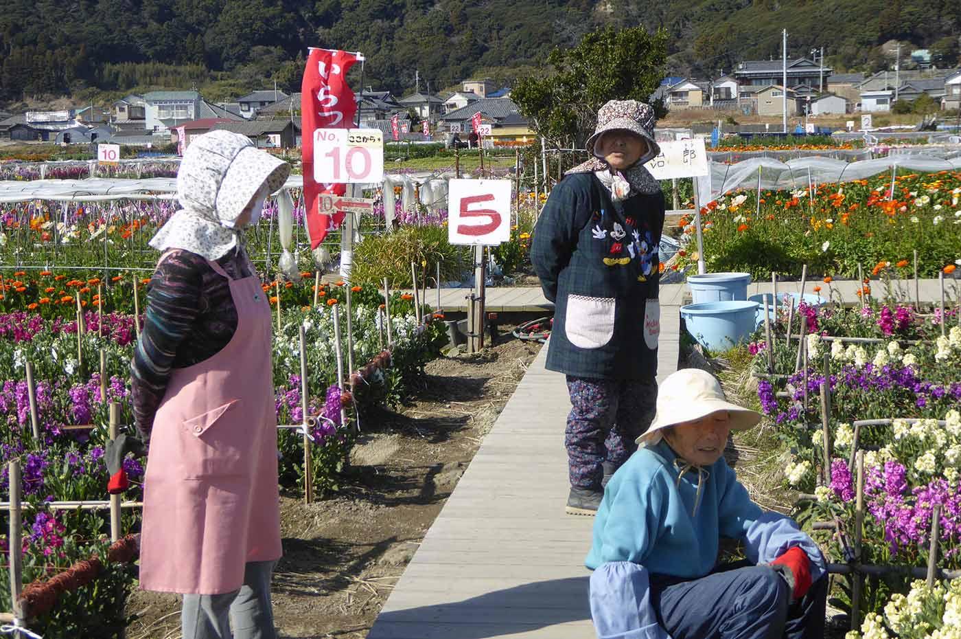 家族時間 南房総 千倉 千田の花畑の明るいお母さん達