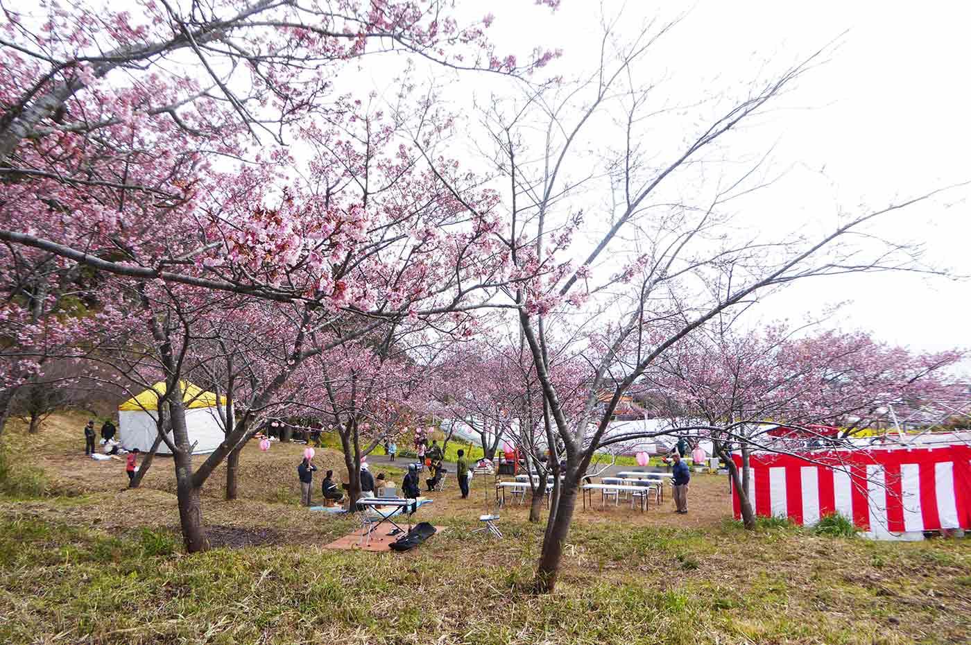 抱湖園の桜まつりの風景2