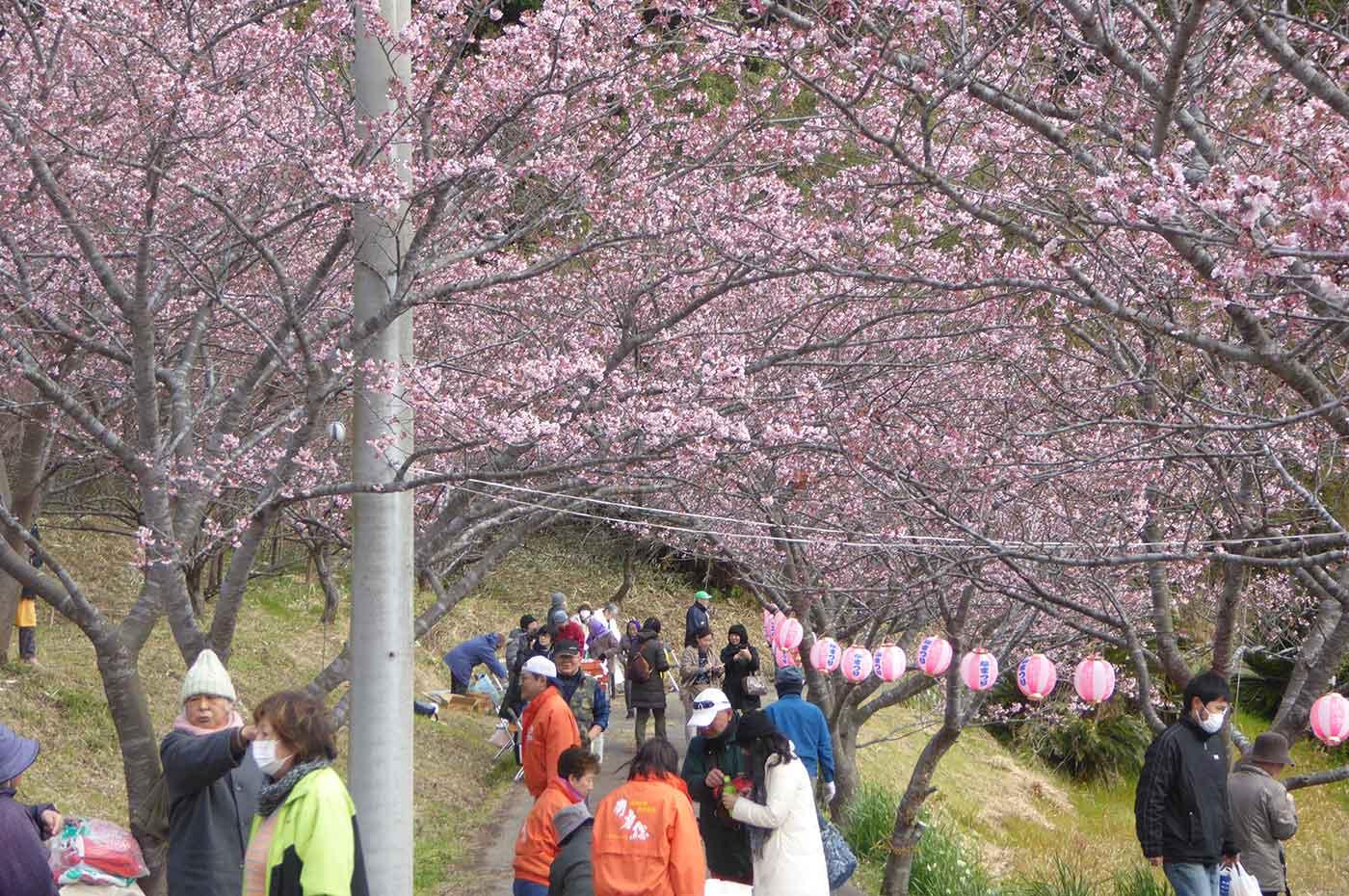 抱湖園の桜まつりの風景