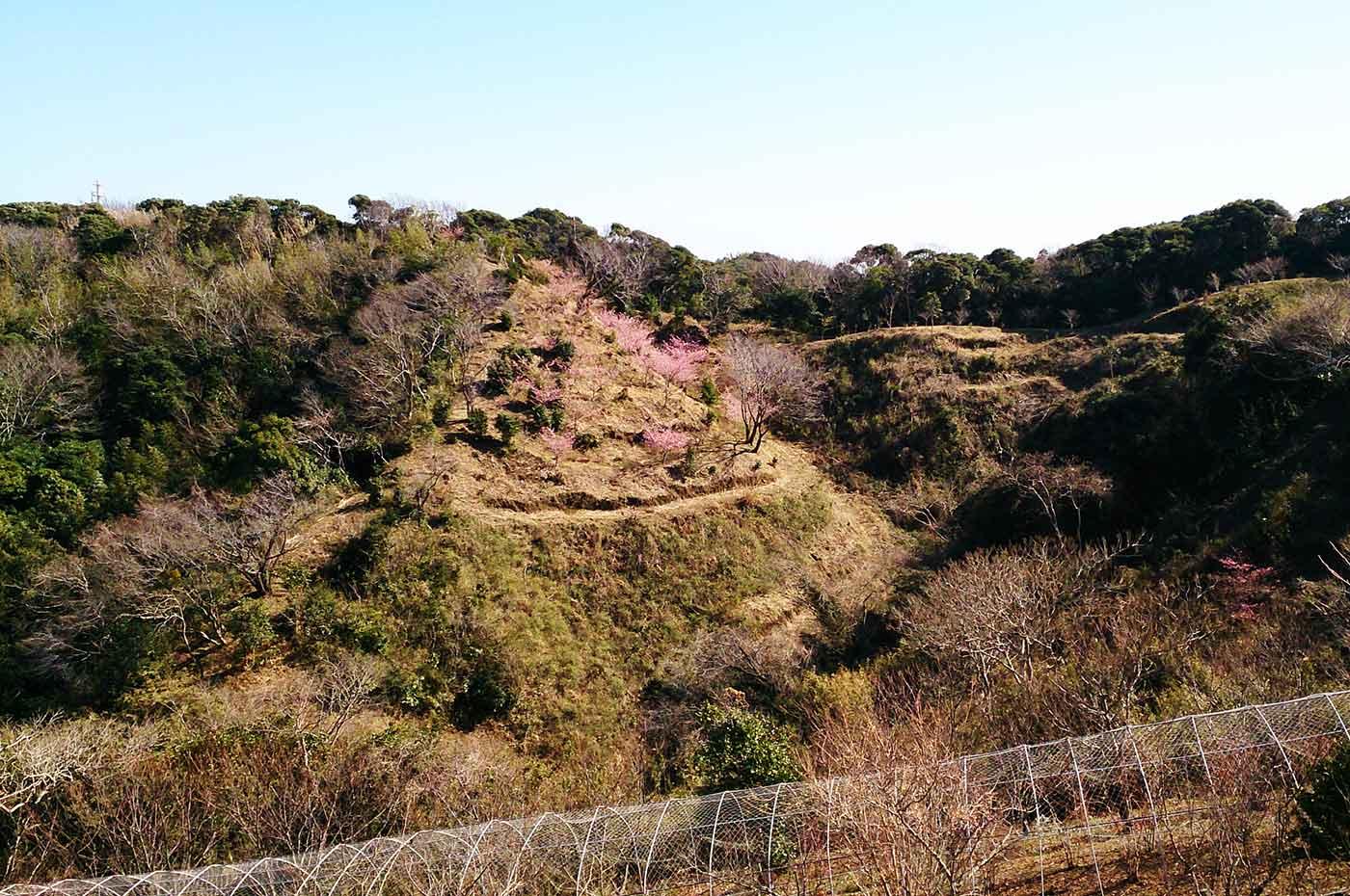 おんだら山  河津桜とブルーベリーの木