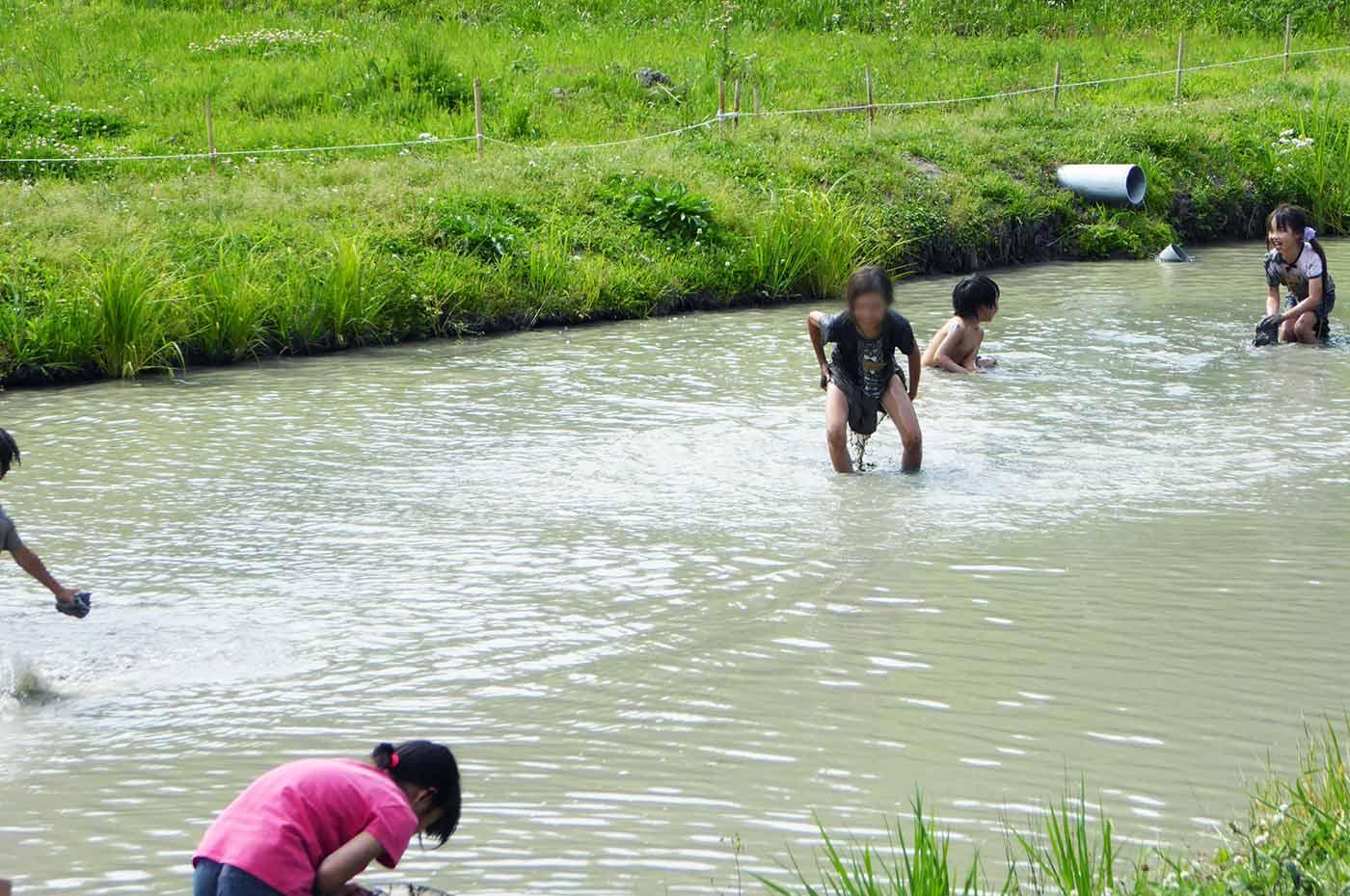 里山わんぱく塾 泥んこ水泳大会