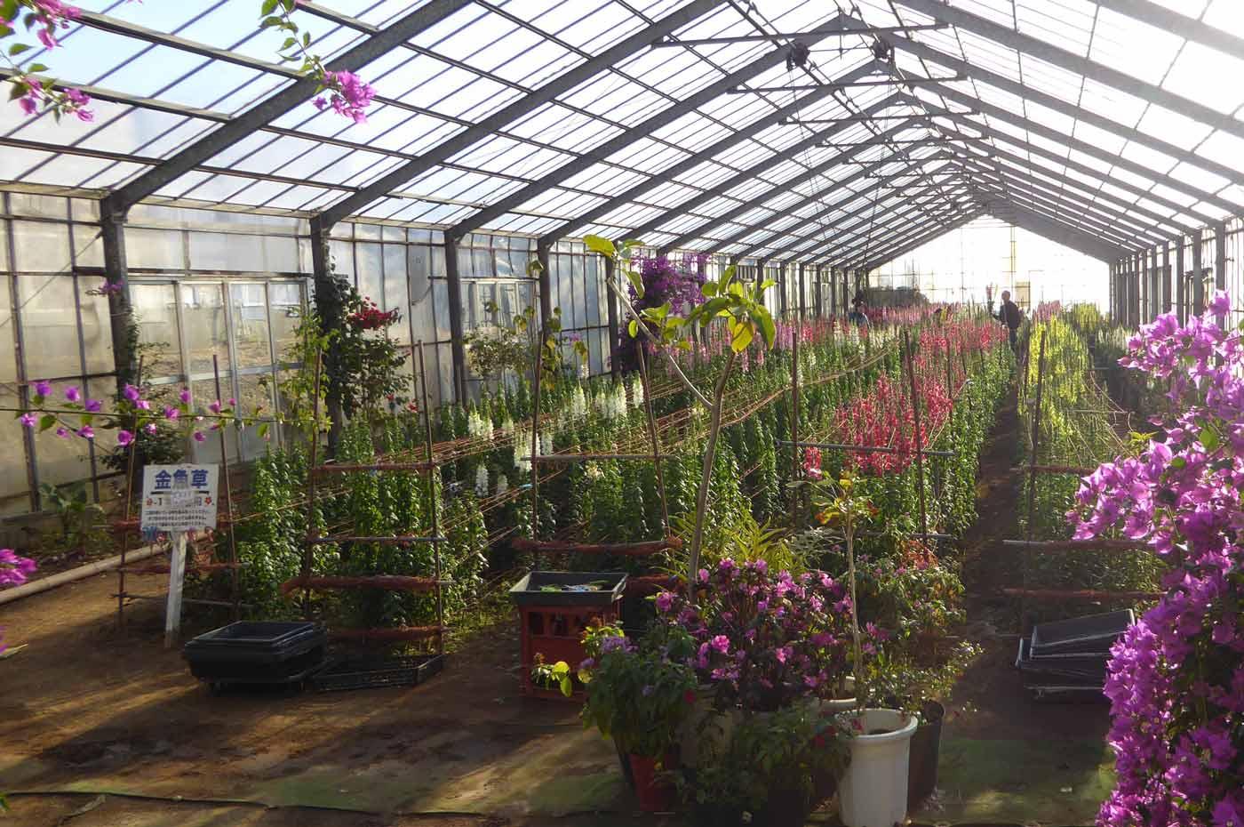 金魚草の温室の画像