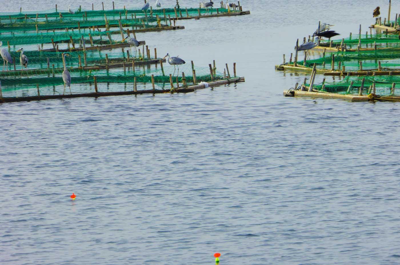 自衛隊堤防のカゴ釣りのポイント