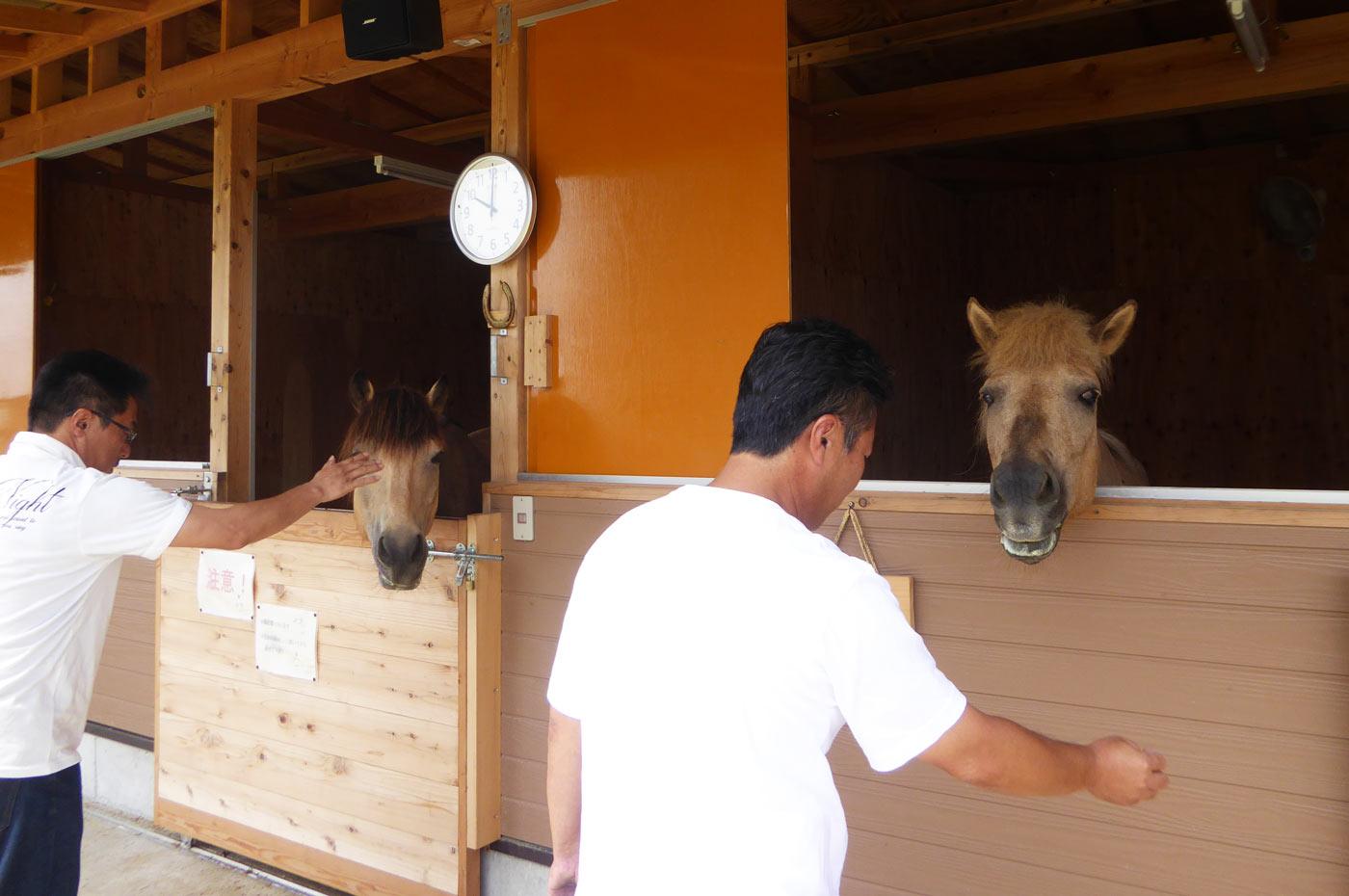 菜の花牧場の馬たちの画像