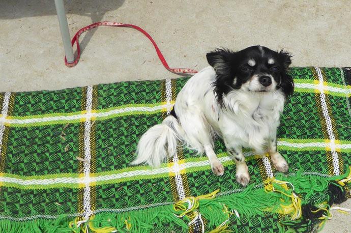 SSBの犬の画像