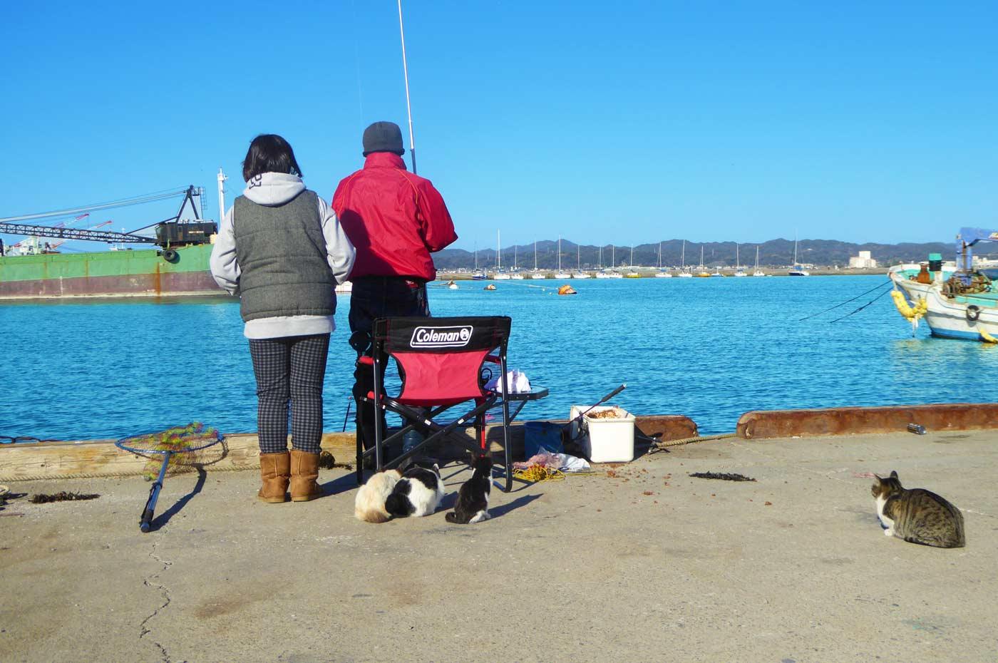 館山港の釣り人とネコ