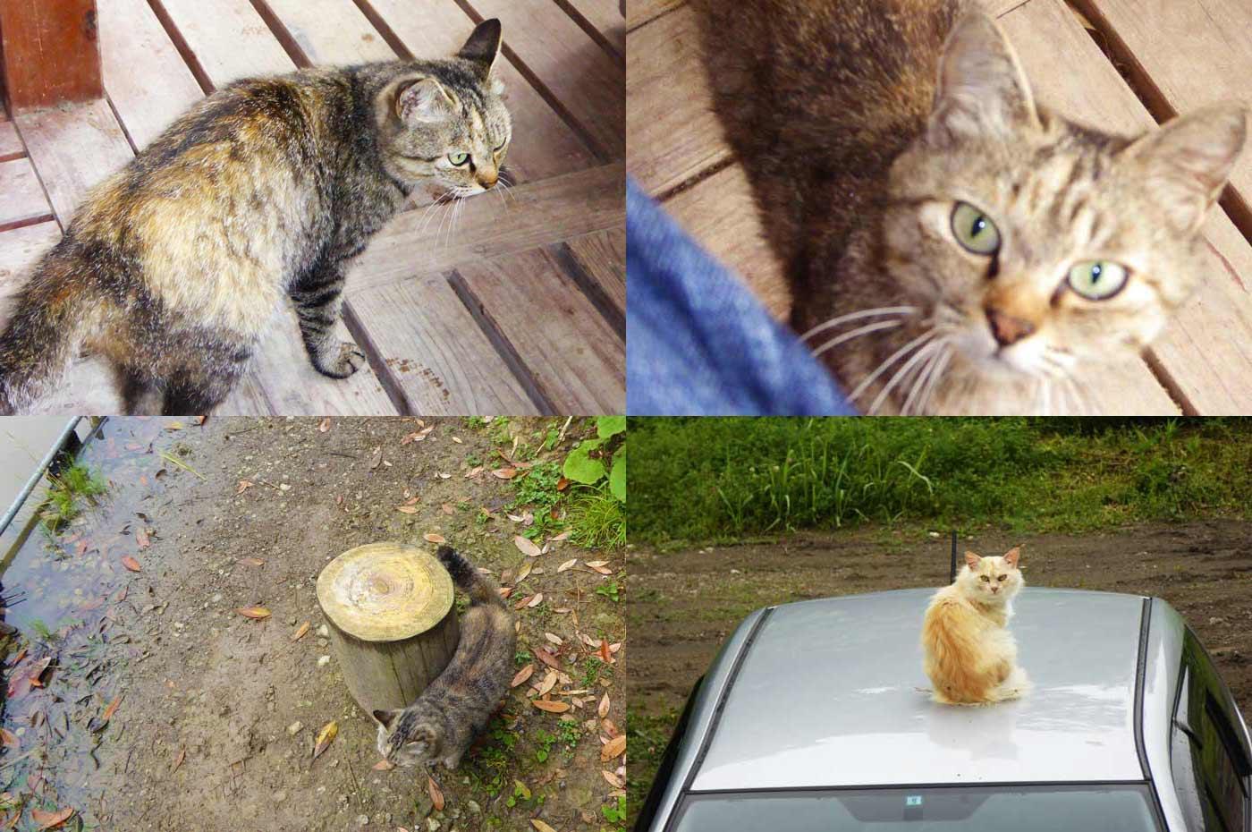 オラホフィッシングスポットの子猫