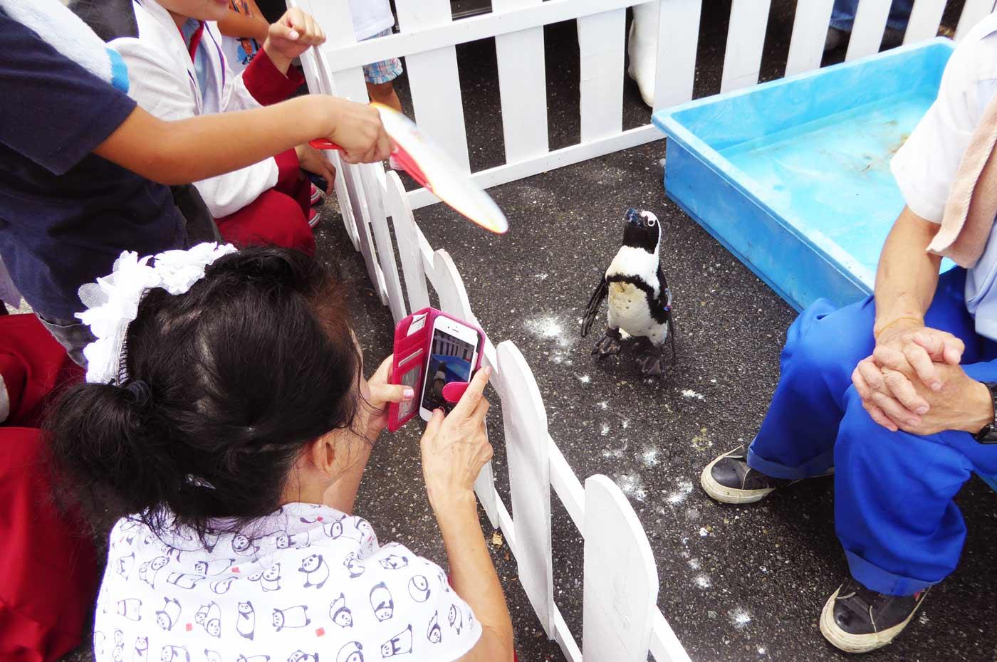 まほろば夢楽まつりのペンギン