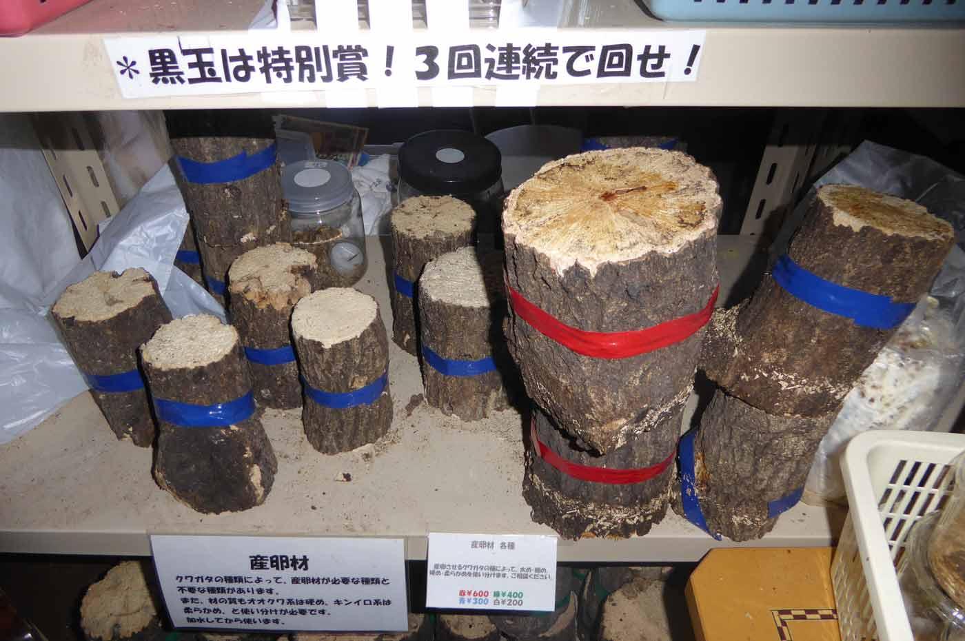 館山クワガタセンターの産卵木