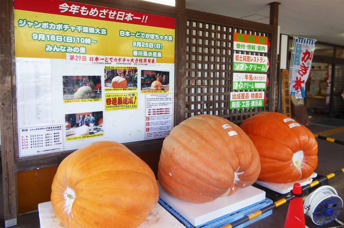 巨大かぼちゃの画像