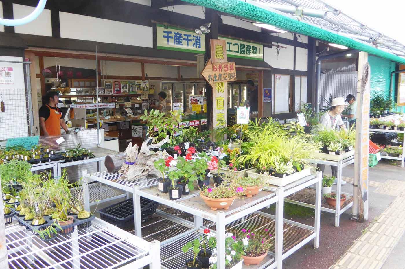 花の苗と地元農家の野菜売り場