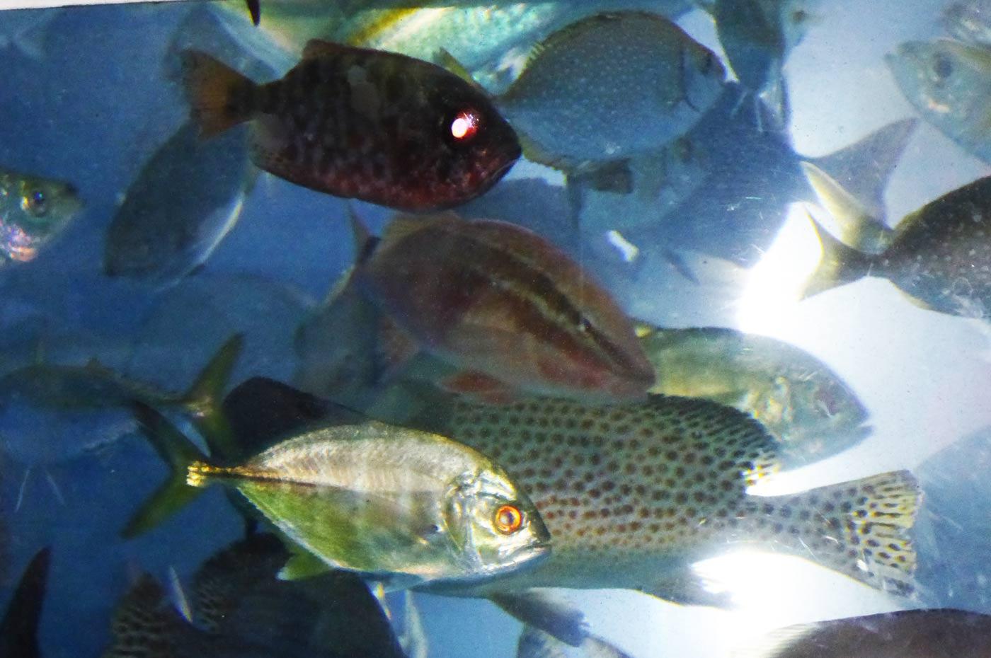 八景島シーパラダイスのミニ水族館