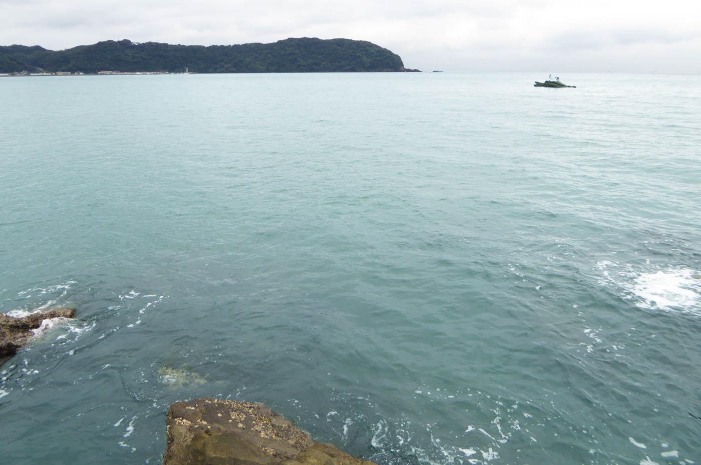 富浦旧港とカメ