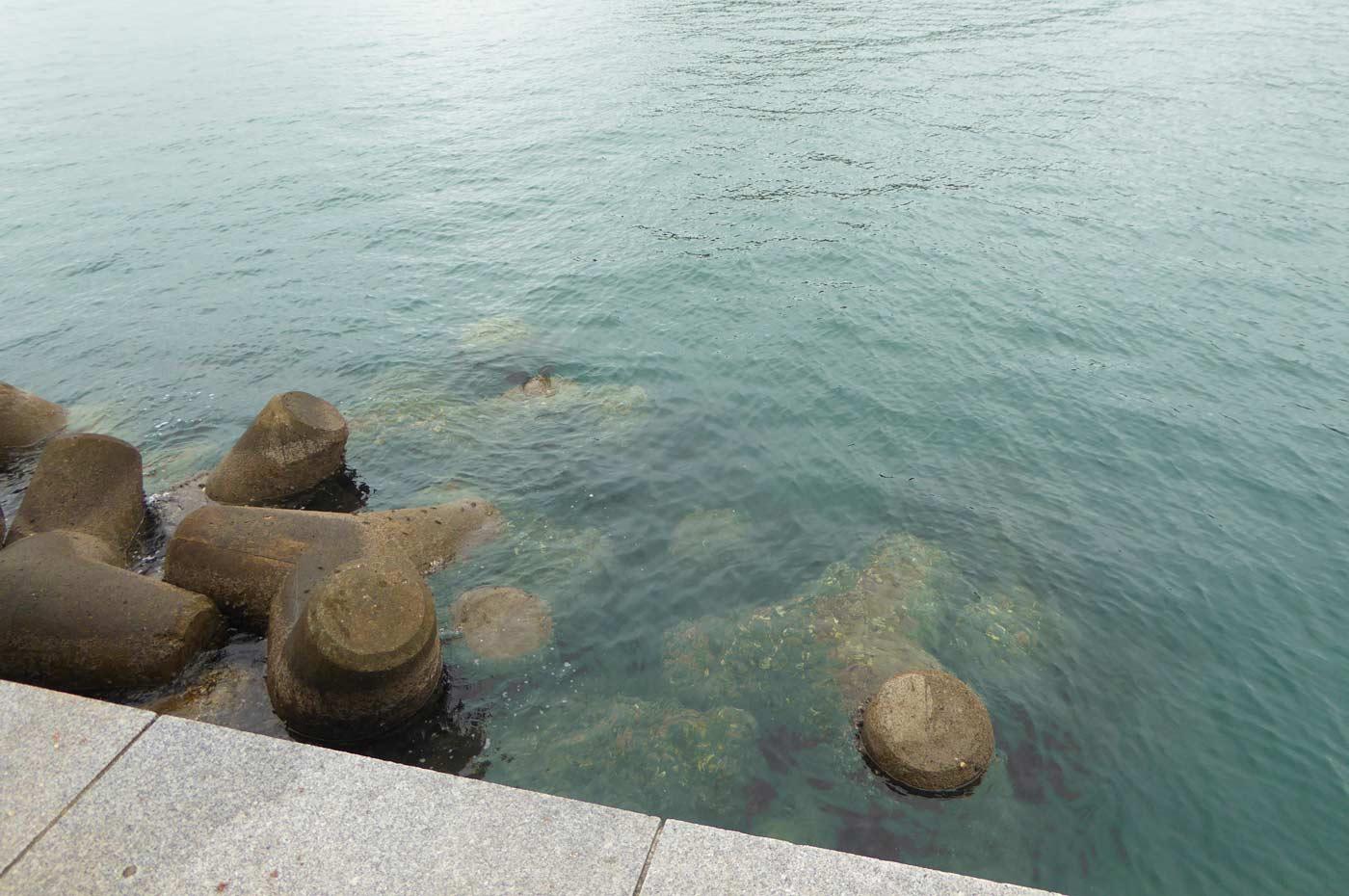 富浦旧港 防波堤先端のポイント