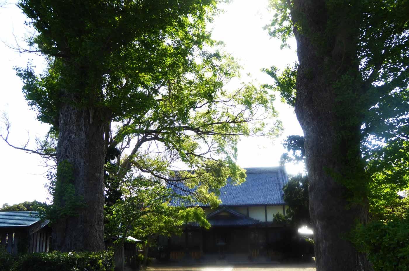 蓮台寺大銀杏と本堂の画像