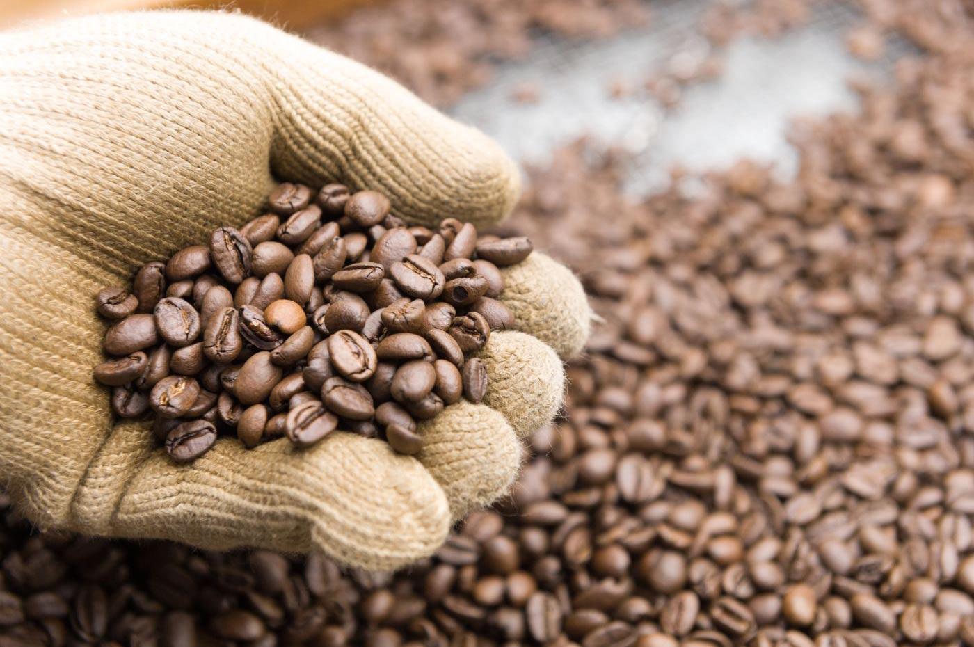 老舗コーヒーショップ・サルビア・コーヒー豆の餞別2