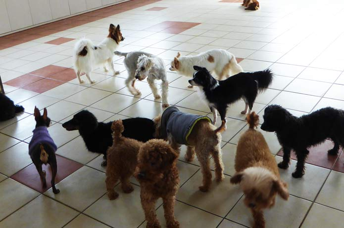 犬猫ランドのたくさんの犬たちの画像