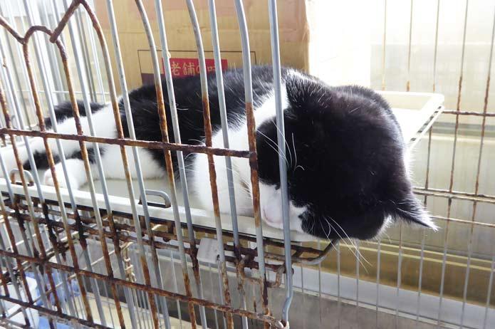 犬猫ランド寝ている猫の画像