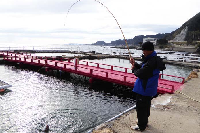 真鯛を釣った瞬間の画像