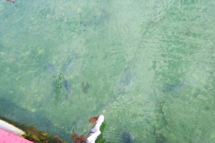 太海磯釣りセンターの水中