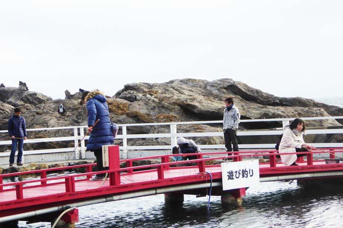 太海磯釣りセンターの遊び釣り区画の画像