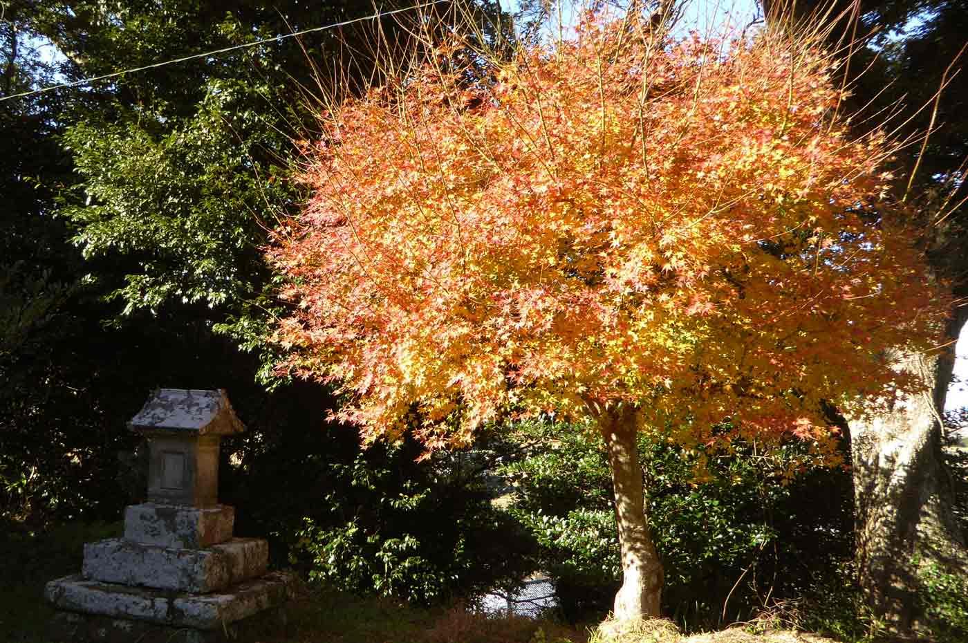 山荻神社の富士大神と紅葉