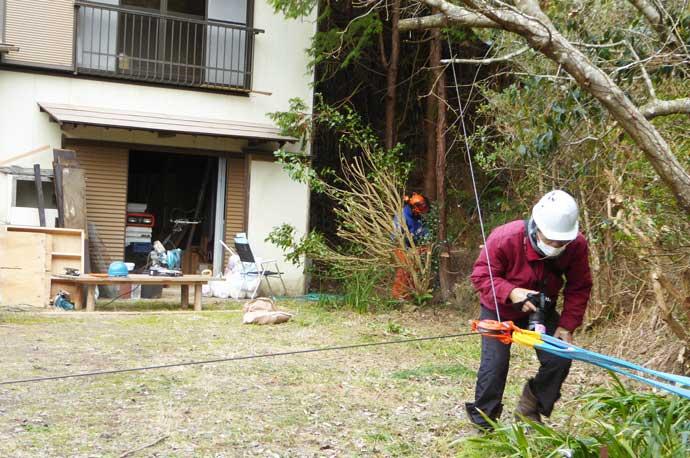 杉の木伐採の準備