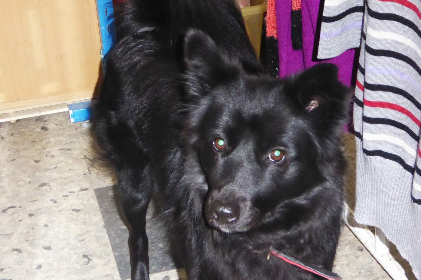 カーサマリーの看板犬の画像