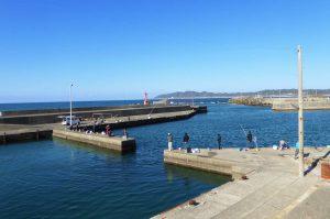 布良魚港港内のポイント